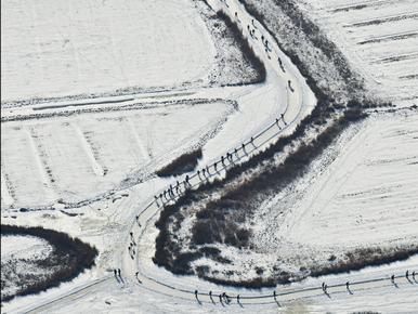Topdrukte op Noord-Hollands ijs