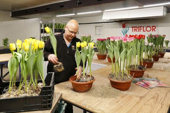 Tulpenkeuringen voor de een als serieuze test, voor de ander als spelletje