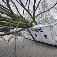 De bloemenkar aan het Emmaplein is vernield door een omgewaaide boom .