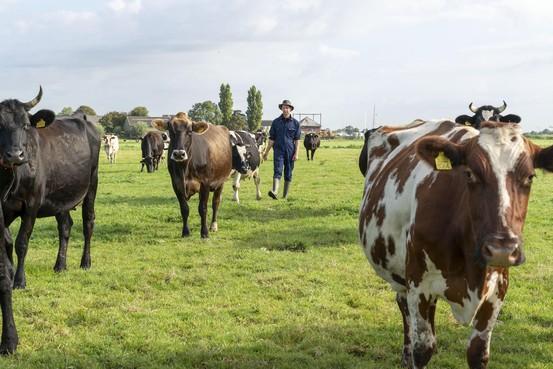 Loeren bij de boeren: Met de schoolklas naar de melkrobot