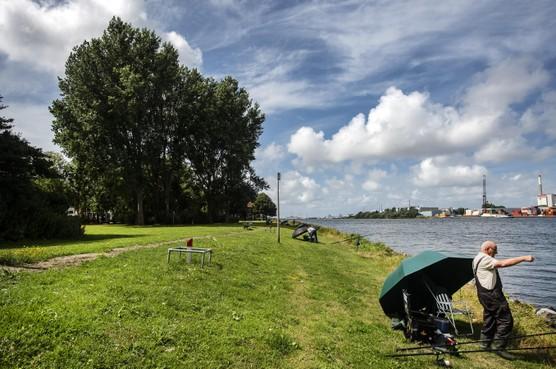 Natuur om de hoek: Zeeasters langs het Noordzeekanaal