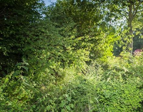 Te koop: extra stukje tuin voor Alphenaren