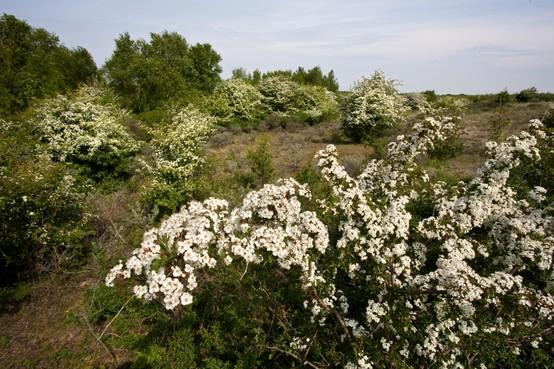 Tuinbezitters in Stichtse Vecht staan te trappelen voor initiatief gemeente, gratis boom voor inwoners