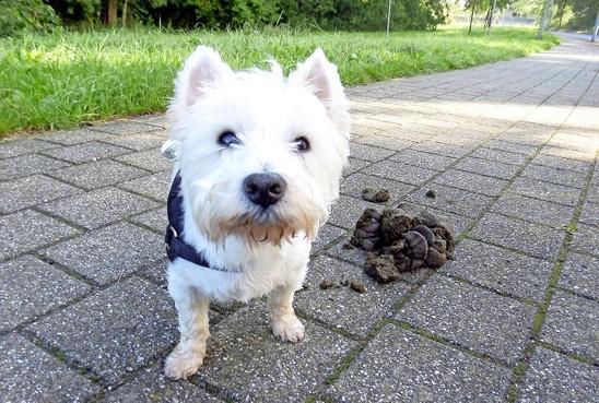 Stelling: Hoge boete bij hondendrol op straat