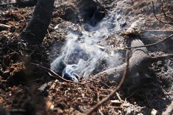 Recente branden bewijzen: Gevaar natuurbrand groter dan ooit door aanhoudende droogte