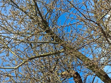 Akkoord over 35 extra bomen in Ingenieursbuurt