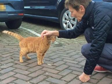 Maandenlang vermiste kat meldt zich bij politie