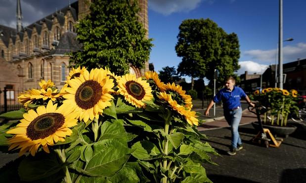Weer Oekraïense zonnebloemen bij herdenking MH17 in Hilversum