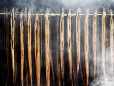 Politiek en buren zetten vraagtekens bij palingkweker Oegstgeest