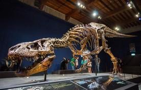 T. rex Trix.