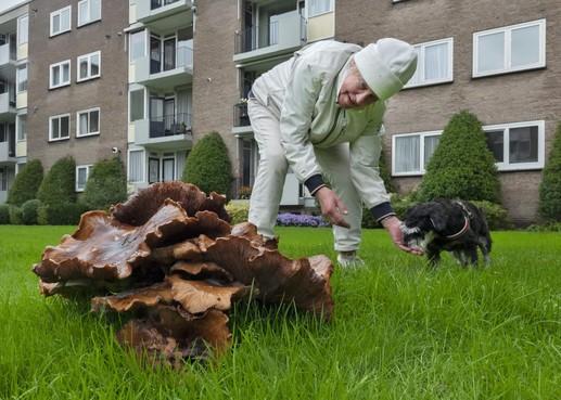 'Krankzinnig grote' paddenstoel in Bloemendaal