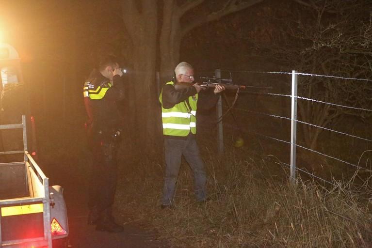 Hert doodgeschoten na aanrijding met auto in Overveen