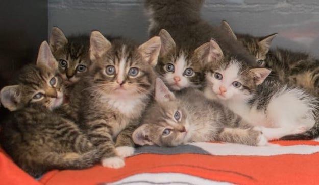 Explosie aan kittens in dierenasiel Den Helder