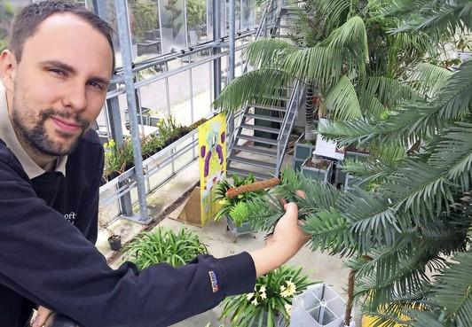 Levend fossiel bloeit in Hortus botanicus