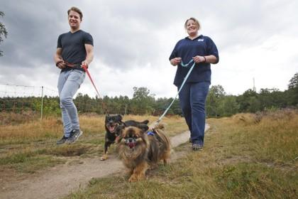 Hilversumse asielhonden aan de wandel, start-up Happy Dogs & Shelters maakt viervoeters gelukkig