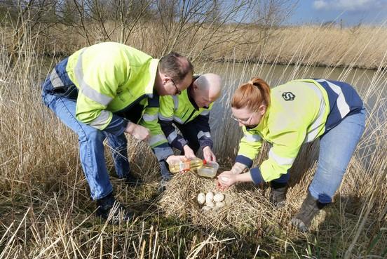 Schager ambtenaren smeren 1200 ganzeneieren in als actie tegen overlast