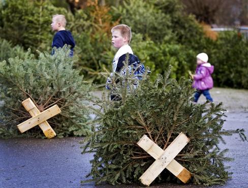 Bijl aan wortel kerstboominzameling in Stichtse Vecht. Of toch niet?