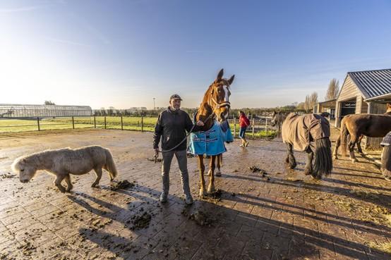Paardenman John van Paridon: 'Wees eindelijk duidelijk over Mient Kooltuin'