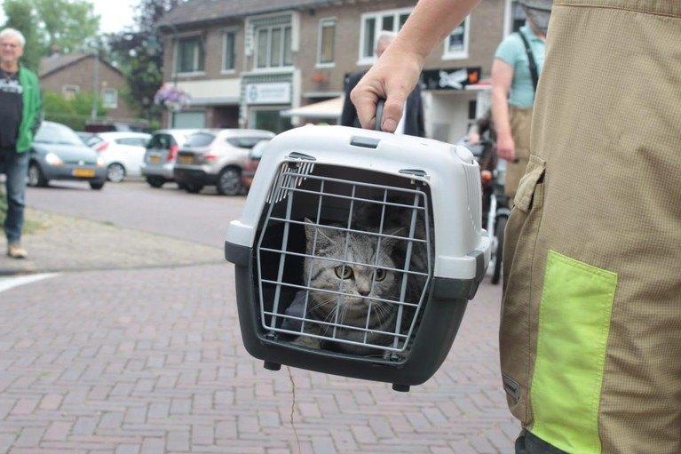 Kat twee dagen vast in boom Laren
