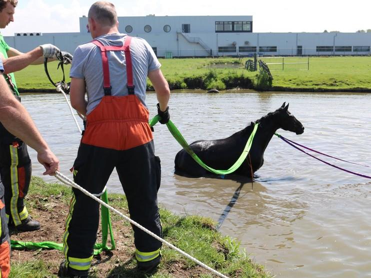 Paard uit sloot gered in Voorhout
