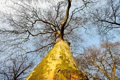 Schagen haalt glasbak nu Deen weg is - en plant er een boom terug