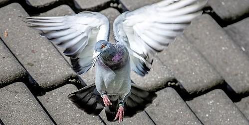 Voeren vogels verboden