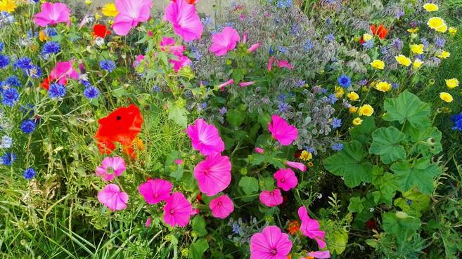 GroenLinks Huizen wil bermen vol wilde bloemen