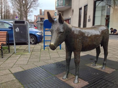 Jarige ezel viert feest in Heemskerk