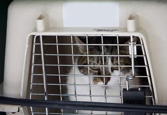 Dierenopvang Soest vraagt om extra donaties na grote instroom verwaarloosde katten