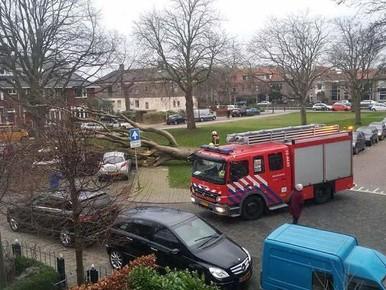 Oude boom valt op drie auto's in Voorschoten