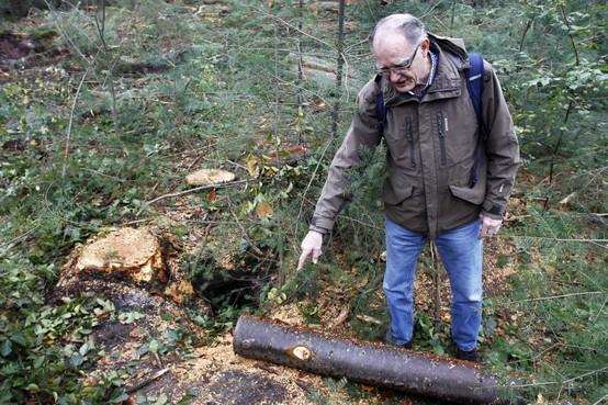 Woede over negeren dassenburcht bij massale kap op landgoed Monnikenberg