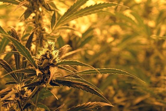 Burgemeester sluit drugswoning in Zwaag