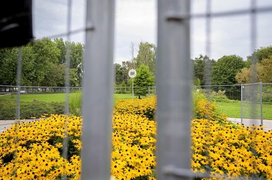 Bloemen achter het hek voor drukke Damloop
