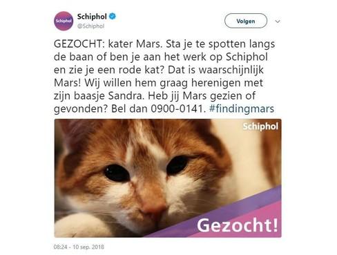 Schiphol roept spotters en werknemers op uit te kijken naar vermiste kat