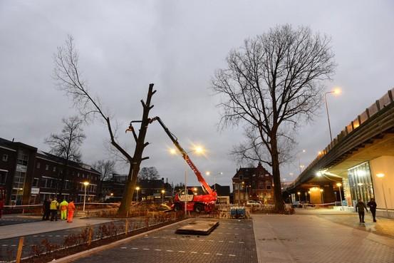 Uitvaart voor dode bomen Koog aan de Zaan