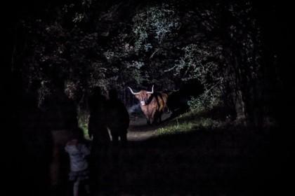 Duistere activiteiten in de Nacht van de Nacht