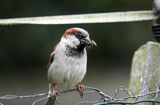 Klein vogeltje blokkeert maandenlang dakrenovatiewerkzaamheden van Woningstichting Den Helder