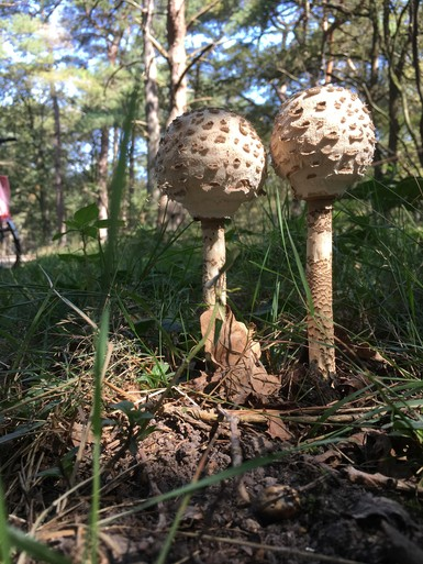 Bekijk hier een kleine selectie van de meer dan 600 foto's van paddenstoelen die lezers de afgelopen weken stuurden