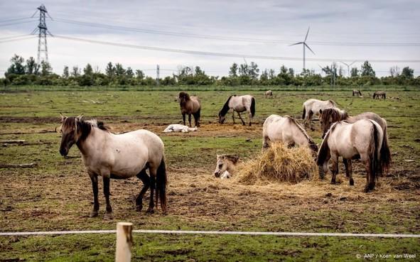 Spoeddebat over paarden Oostvaardersplassen