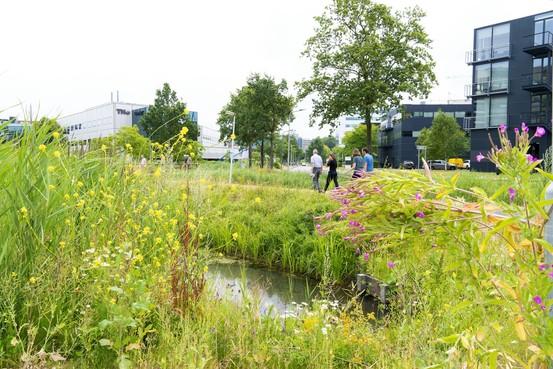 Ondernemers willen biodiversiteit op Leiden Bio Science Park behouden