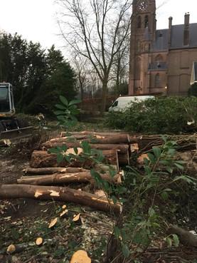 Raad wil druk op herplant van bomen Ankeveensepad