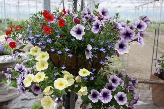 D66 Blaricum wil via amendement Bijvanck meer in de bloemetjes zetten