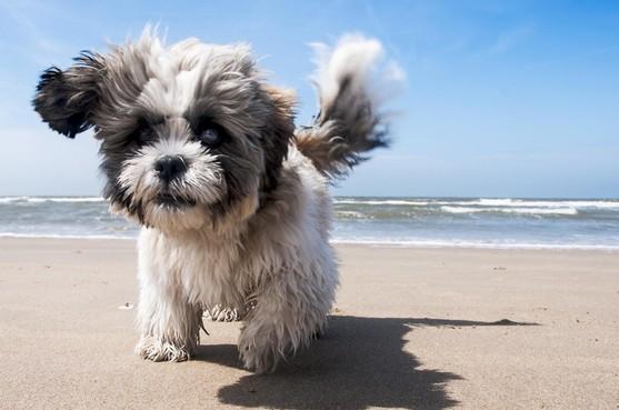 Gemoederen lopen hoog op op Texel na verbod op honden bij strandpaviljoen