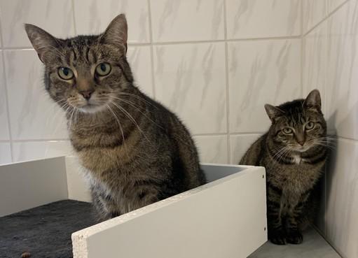 Weesdier: Miep en Muis willen naar huis en wel nú