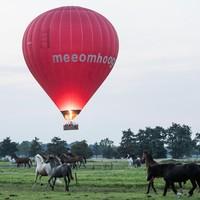 Paarden in galop door de herrie van de ballon.