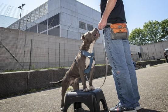 Alphense gedetineerden trainen getraumatiseerde asielhonden, 'belonen van goed gedrag werkt'