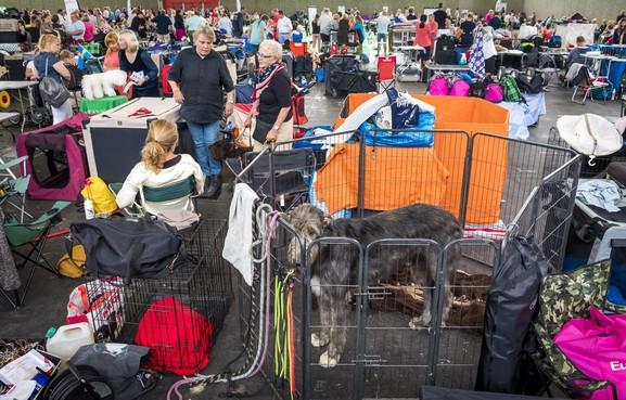 Oververhitte honden in auto's bij hondenshow Amsterdam