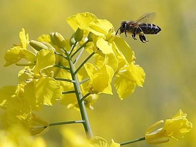 Wintersterfte bijen was ongeveer normaal