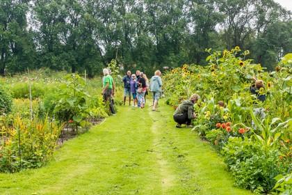 Ook in de vakantie aan het werk in de schooltuin: 'Uien zijn heerlijk, maar alleen uit eigen tuin' [video]
