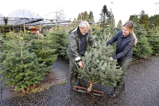 Verkoop kerstbomen piekt al vroeg bij tuincentrum Haan in Santpoort-Noord